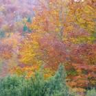 Oct08-064.jpg