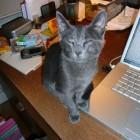 2007-10-Sharon97.jpg