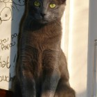 2008-01-Sharon64.jpg